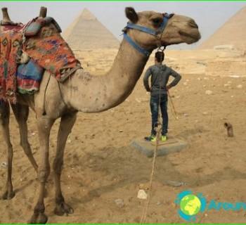 alternative-Egypt-any alternative-rest-in