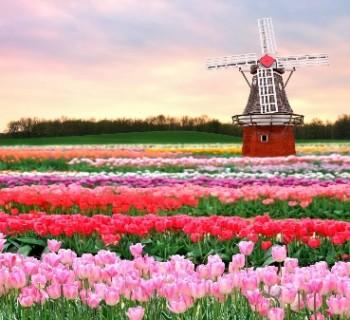 Gardens Holland