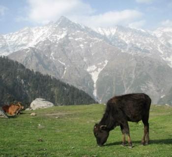 Indian reserves, national, natural