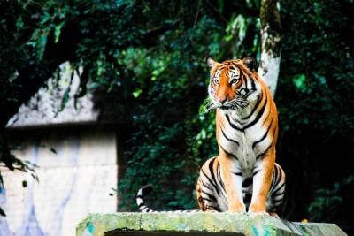 Zoo-to-Kuala Lumpur-photo-price-work-hours-a