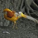 Zoo-Rio de Janeiro-photo-price-work-hours-a