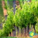 Bulgaria wine-red, dry white wine, the best-