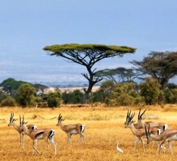 West-Africa-photo holiday resorts