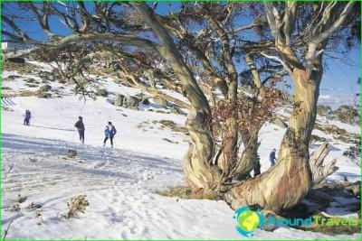 ski-resorts-Australia-photo-reviews-mountain