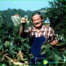 Hungary wine-red, dry white wine, the best-