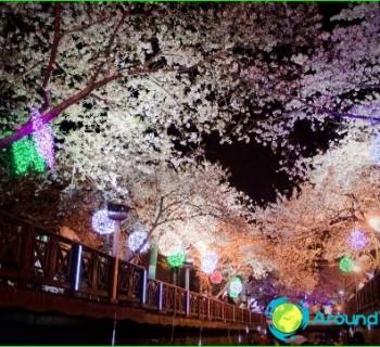 holidays, japan, tradition, national holidays,