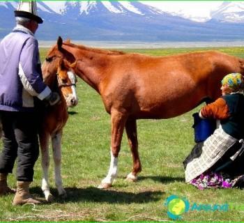 field-Kyrgyzstan-regions, province, Kyrgyzstan