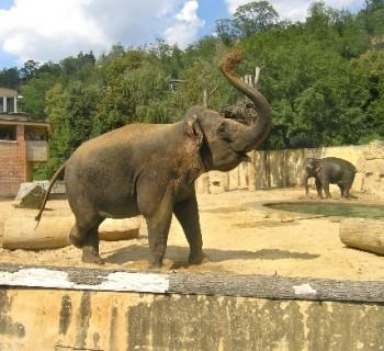Zoo Prague-photo-price-work-hours-a-reach