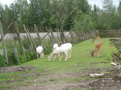 Zoo-to-Klaipeda-photo-price-work-hours-a