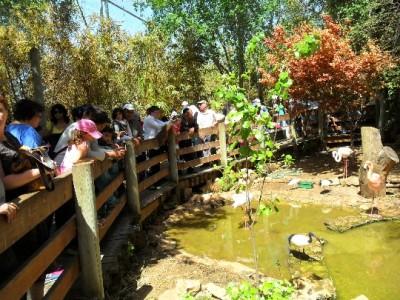 Zoo-in-Haifa-photo-price-work-hours-a