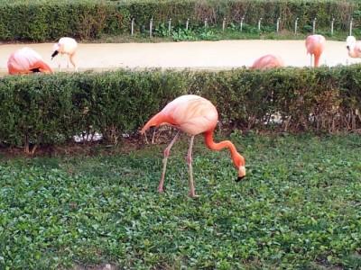 Zoo-Seoul-photo-price-work-hours-a-reach
