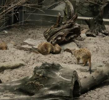 Krakow Zoo-photo-price-work-hours-a