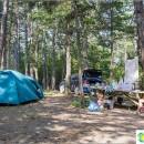 camping-raccoon-arhipo-osipovka-former-pine-paradise-best-coast