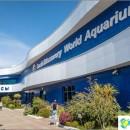 oceanarium-adler-surprising-delight-and-shock