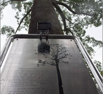 tower-menara-kuala-lumpur-6th-tallest-world