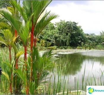 botanical-garden-singapore-not-want-leave