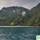 beach-monkey-beach-monkey-beach-monkey-paradise-phi-phi-don