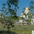 russian-orthodox-church-phuket-orthodox-christian-church