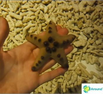 aquarium-kuala-lumpur-an-amazing-journey-into-depths-ocean